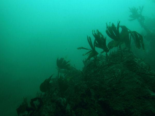 2007-10-27_Diving_Eyemouth_0002.jpg