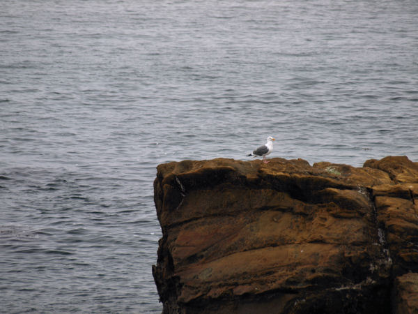2009-05-30_Pacific_Coast_0020.jpg