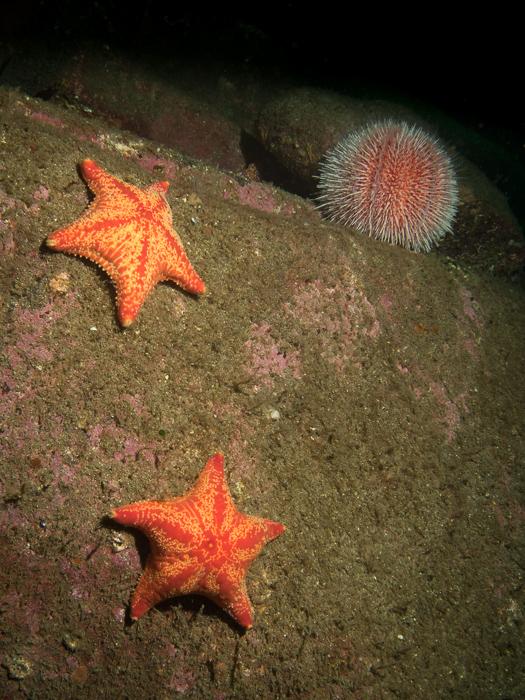 2014-04-11 Ullapool Diving_0034.jpg