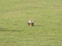 2004-03-14_Suffolk_Weekend_0014.jpg