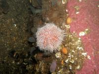 2005-10-08_Diving_Loch_Long_0004.jpg