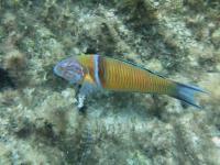 2006-09-21_Malta_0044.jpg