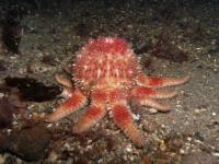 2007-09-29_Oban_Diving_0021.jpg