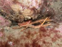 2007-09-29_Oban_Diving_0024.jpg