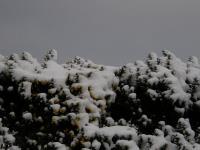 2007-12-31_New_Year_0053.jpg