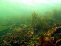2008-03-16_Dogfish_Reef_0008.jpg