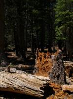 2009-05-23_Lake_Tahoe_0030.jpg