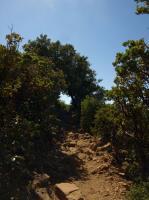 2009-07-03_Mount_Tamalpais_0006.jpg