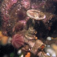 2010-08-20_Moray_Firth_0027.jpg