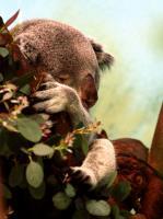 2011-04-16_Zoo_0009.jpg