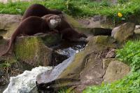 2011-04-16_Zoo_0011.jpg