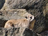 2011-07-30_Zoo_0008.jpg