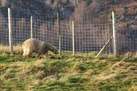 2011-11-19_Highland_Wildlife_Park_0001.jpg