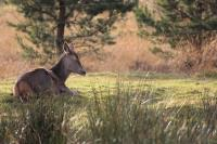 2011-11-19_Highland_Wildlife_Park_0003.jpg