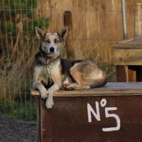 2011-11-20_Sled_Dogs_0000.jpg