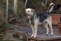 2011-11-20_Sled_Dogs_0001.jpg