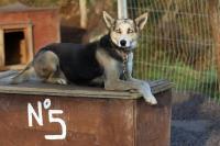 2011-11-20_Sled_Dogs_0004.jpg