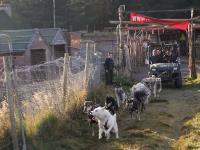 2011-11-20_Sled_Dogs_0013.jpg