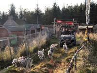 2011-11-20_Sled_Dogs_0015.jpg