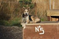 2011-11-20_Sled_Dogs_0018.jpg