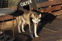 2011-11-20_Sled_Dogs_0020.jpg
