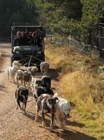 2011-11-20_Sled_Dogs_0022.jpg