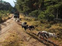 2011-11-20_Sled_Dogs_0023.jpg