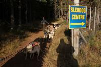 2011-11-20_Sled_Dogs_0026.jpg