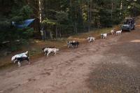 2011-11-20_Sled_Dogs_0029.jpg
