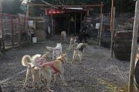 2011-11-20_Sled_Dogs_0033.jpg