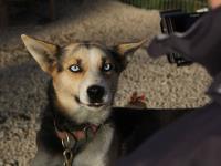 2011-11-20_Sled_Dogs_0035.jpg