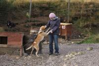 2011-11-20_Sled_Dogs_0039.jpg