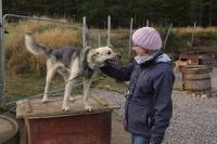 2011-11-20_Sled_Dogs_0042.jpg