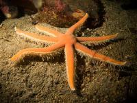 2014-04-11 Ullapool Diving_0013.jpg