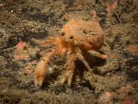 2014-04-11 Ullapool Diving_0055.jpg