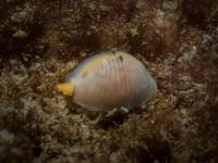 2014-04-11 Ullapool Diving_0059.jpg